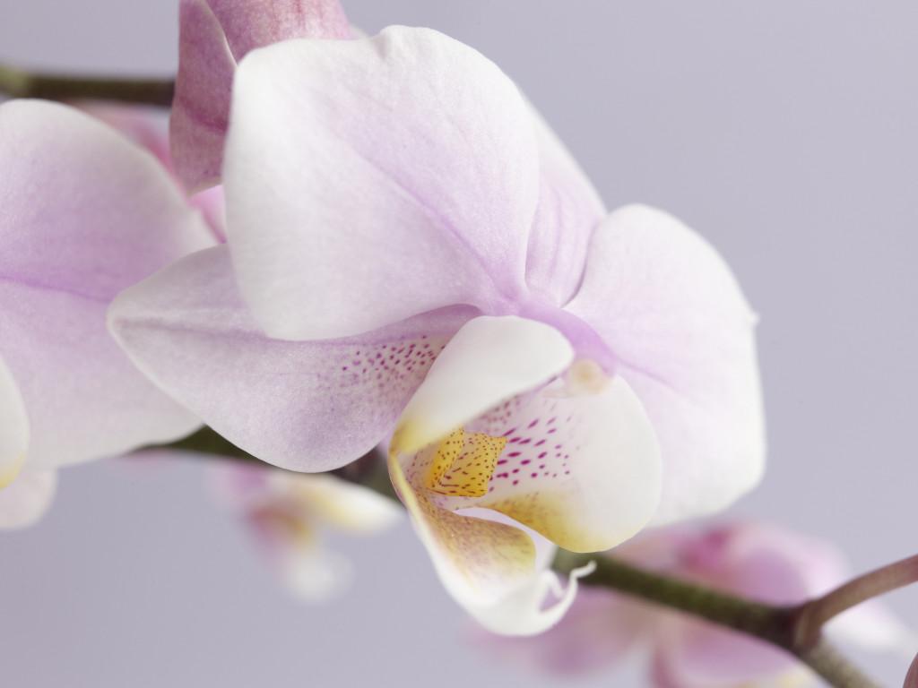 Come Coltivare Le Orchidee In Casa Unadonna