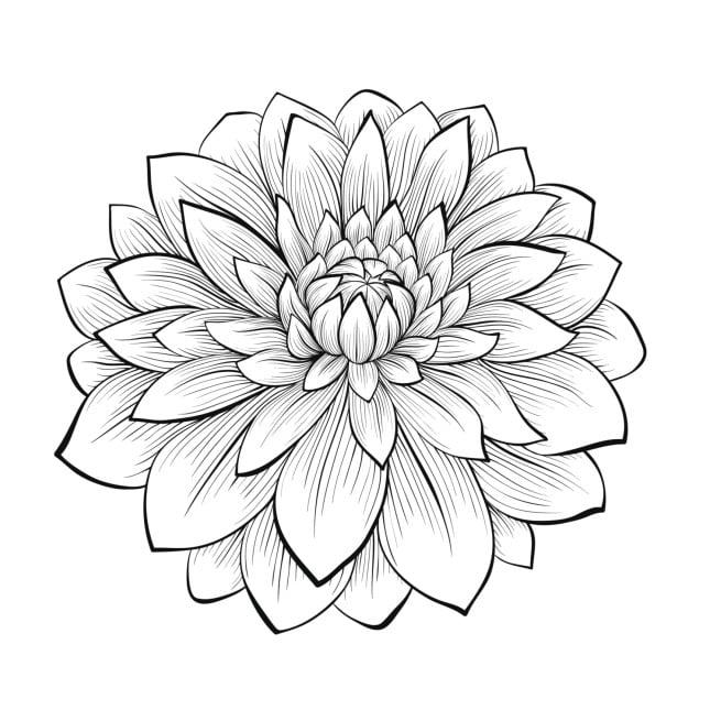 Il fiore di loto, un disegno molto femminile per tattoo floreali
