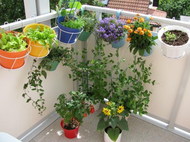 Terrazzo o balcone? Anche un piccolo spazio può diventare un angolo di orto con vasi di erbe aromatiche e fiori