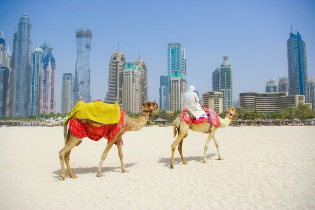 Da Dubai si posso fare anche gite a dorso di cammello nel deserto