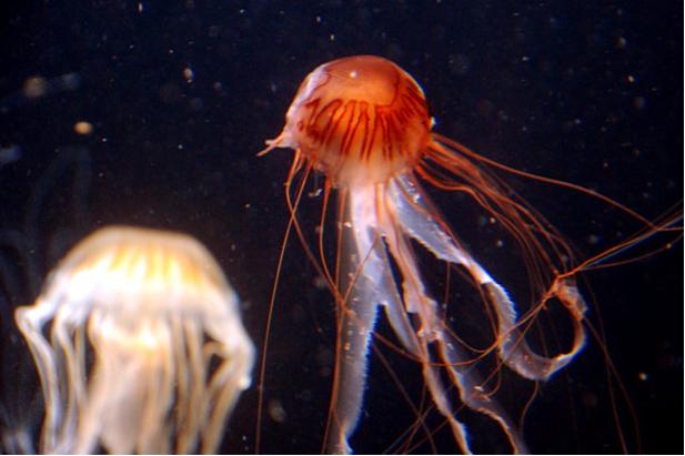 Molti animali marini sono legati alle fasi lunari