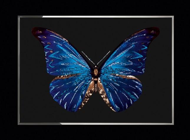 Farfalla - Micheal