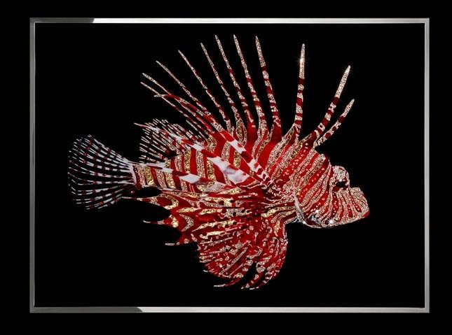 Pesce Scorpione - Micheal