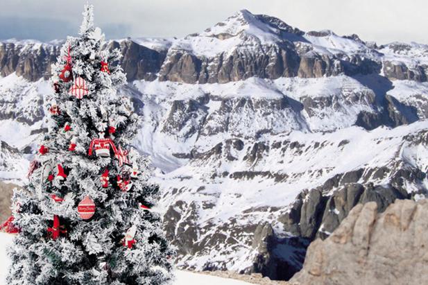 Albero di Natale: bianco come la neve! / COin