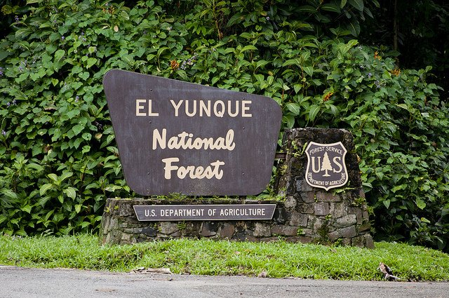 Foresta Nazionale El Yunque / @flickr / vxla