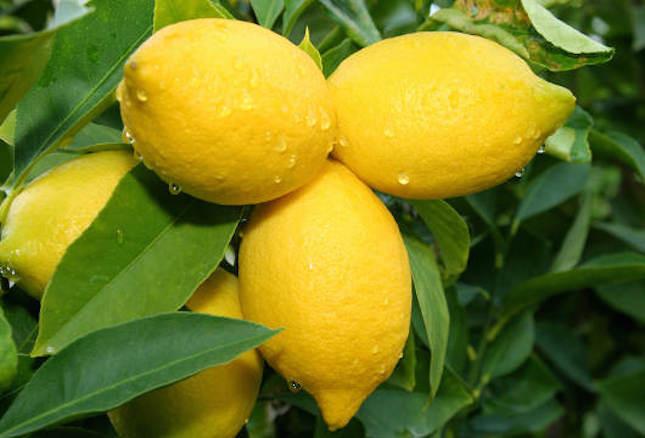 Il succo di limone serve per rinvigorire i capelli sfibrati