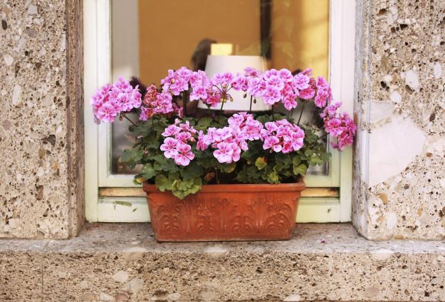 Gerani rosa alla finestra