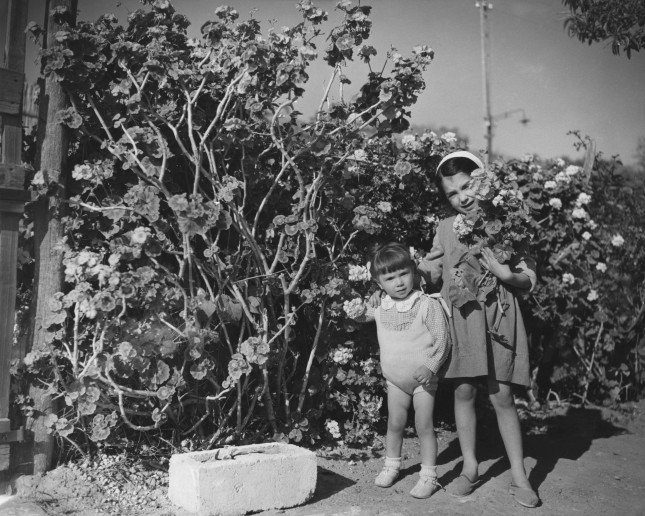 Maggio 1955. Due bambine raccolgono gerani in un giardino di Imperia.