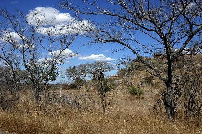 Paesaggio del parco Kruger  in Sud Africa