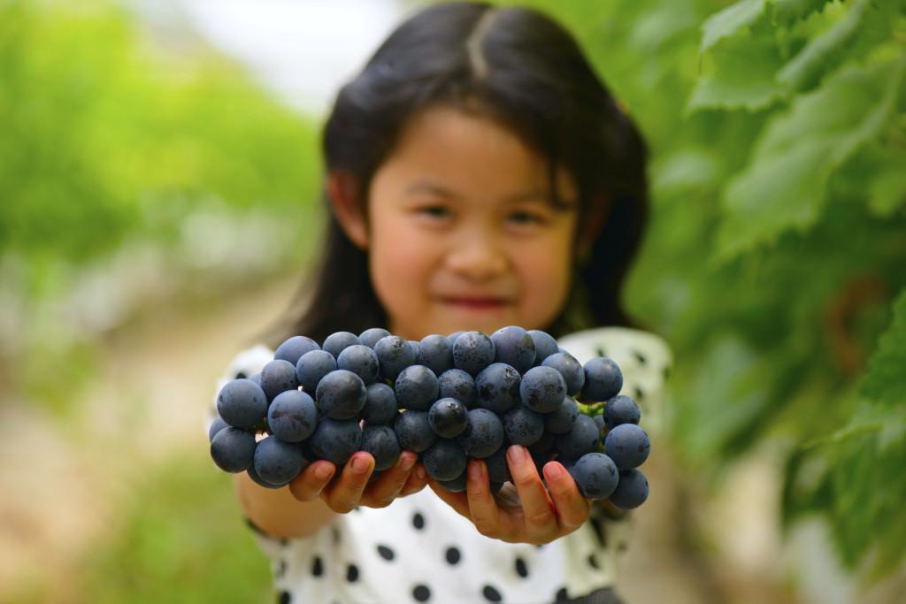 Il viola dell'uva è utile nel rendere più elastiche le pareti dei capillari