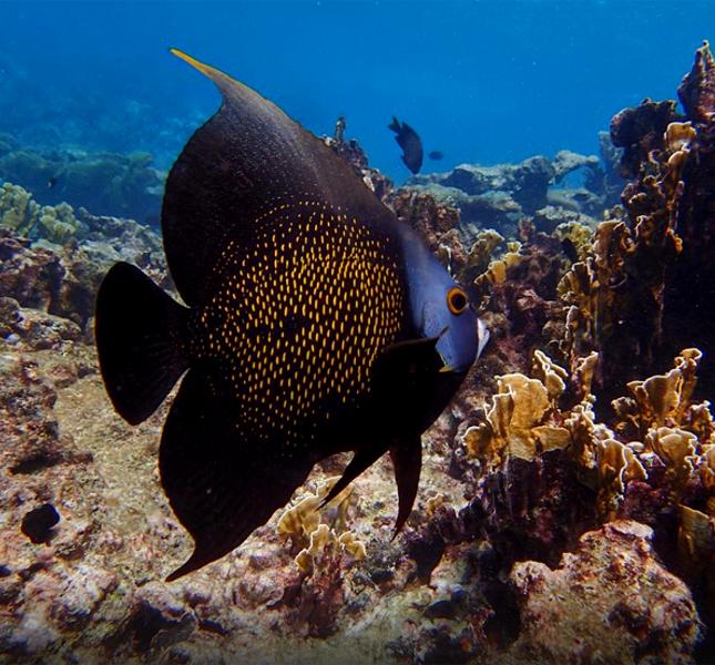 Alla scoperta di pesci e fondali con l'Aruba Bob Snorkeling