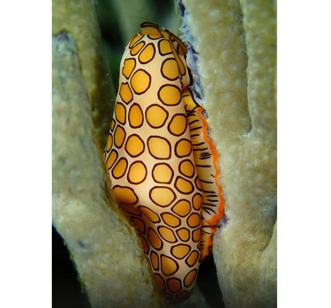 Colori e meraviglie. Aruba Bob Snorkeling