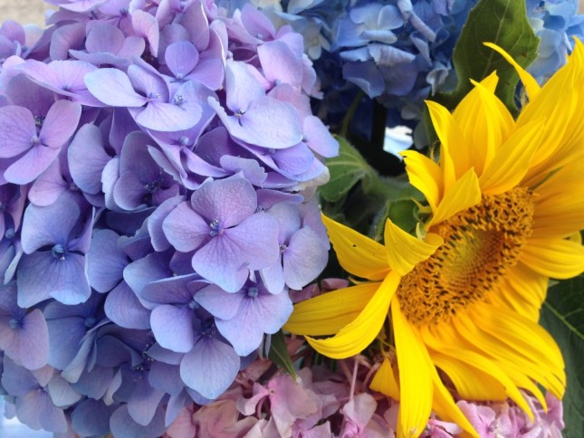 Se ricevi in dono delle ortensie abbinate a un girasole, il linguaggio dei fiori dice che è un simbolo di vero amore