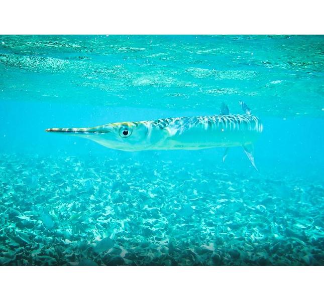 Snorkeling tra le acque trasparenti di San Pedro, in Belize
