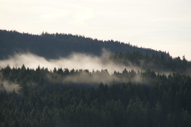 Schluchsee, Foresta Nera / pixabay / Schlumpf98