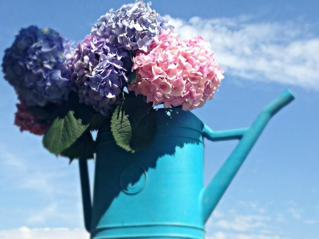 Puoi disporre le tue ortensie in vasi o, perché no, in annaffiatoi, un'idea originale da utilizzare all'interno o all'esterno della tua abitazione