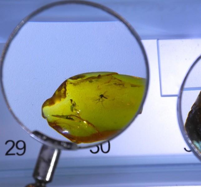 Il museo dell'ambra ripercorre la storia di lavorazione di questa resina e comprende alcune interessanti inclusioni ©CMariani