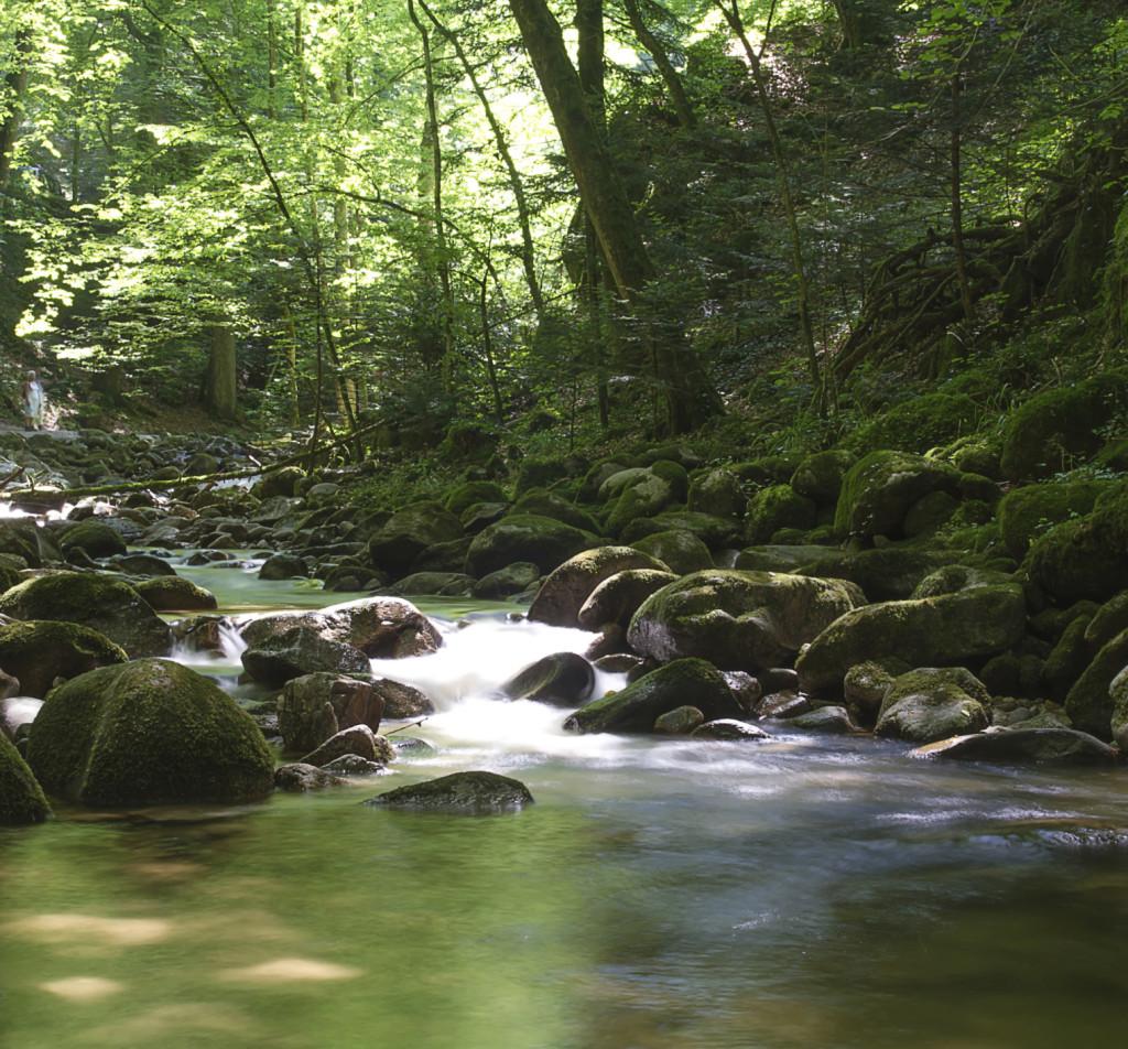Corso d'acqua nella Foresta Nera, Germania