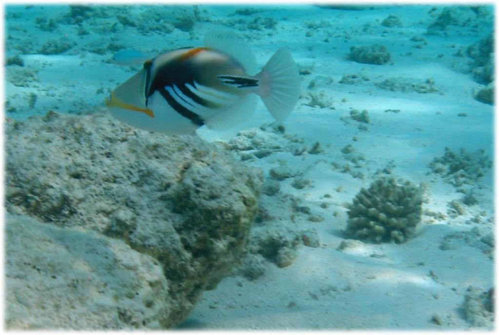 Bellissima la fauna sottomarina da ammirare durante le escursioni