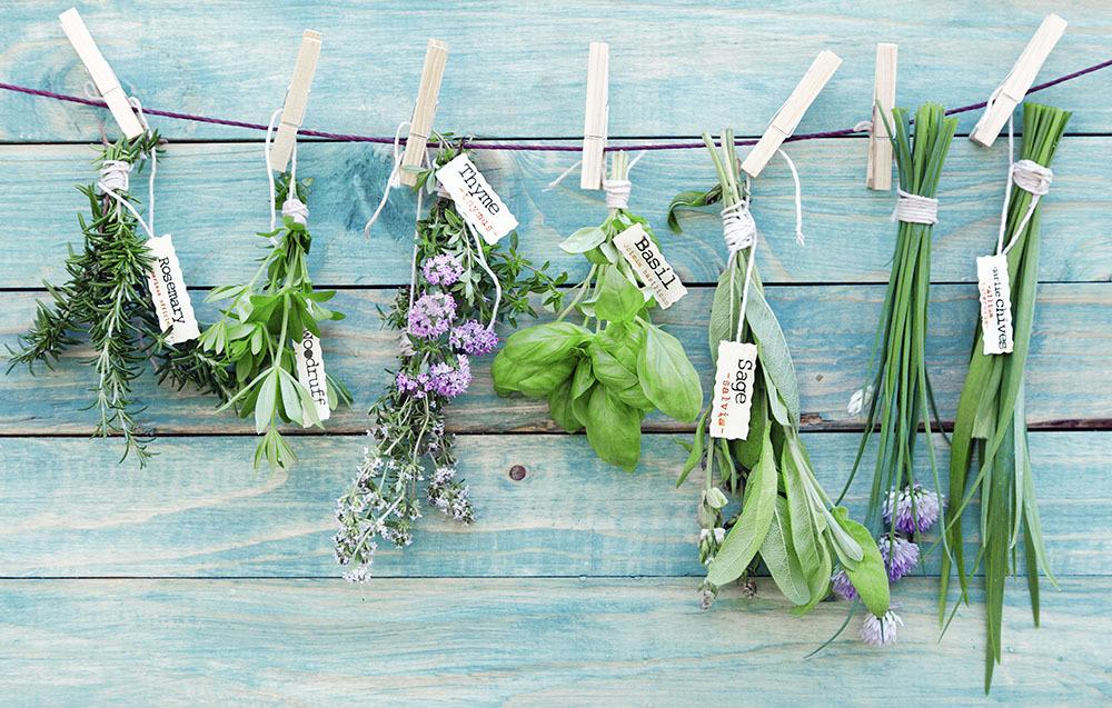 Conservare le erbe aromatiche