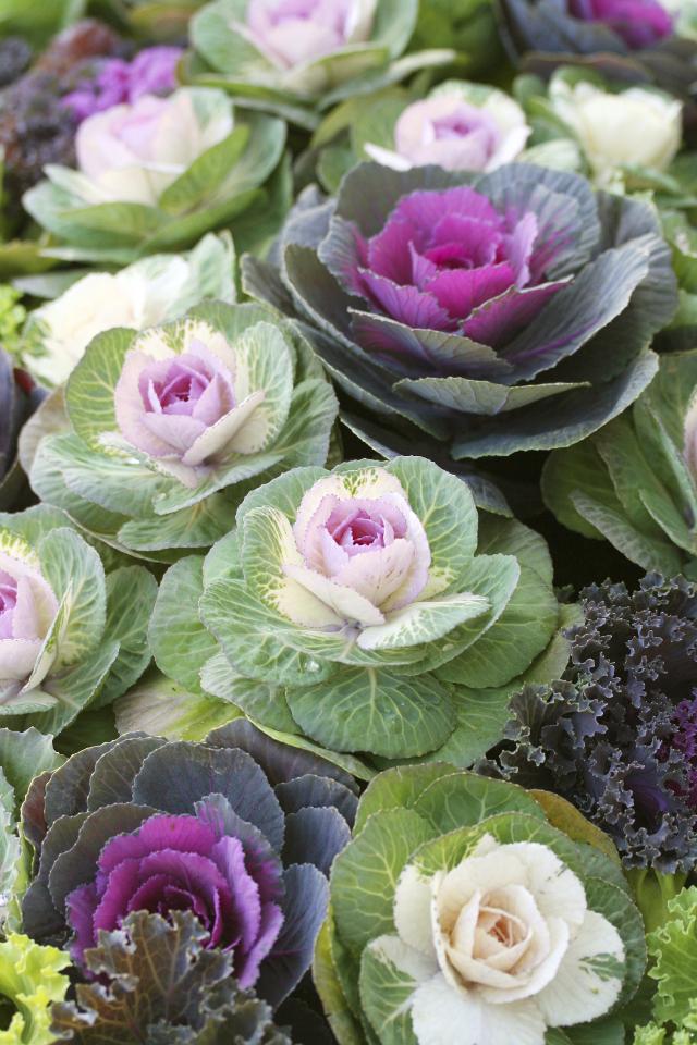 Balconi colorati anche in autunno le piante e fiori for Piante e fiori