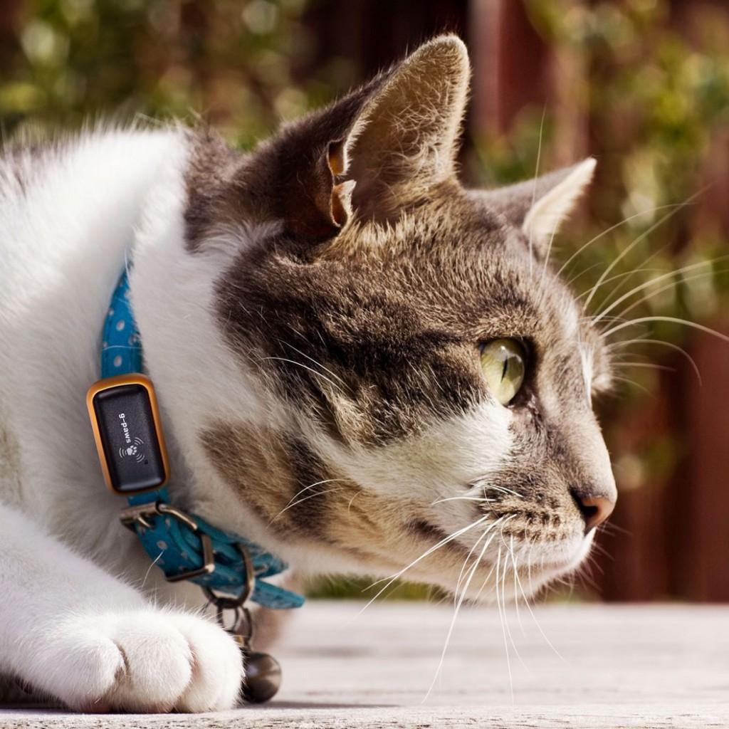 Gps-gatto