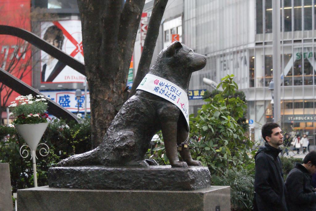 Statua di Hachiko Credits: Luca Mascaro