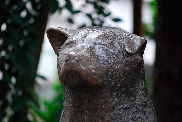 Primo piano della statua di Hachiko Credits: Tokyo Times