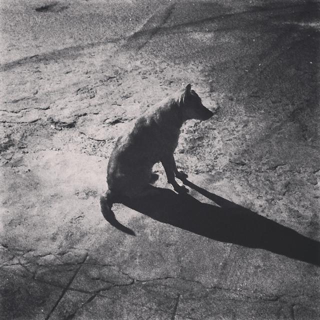 Il cane Hachiko che aspetta il proprio padrone Credits: Rakesh Rocky