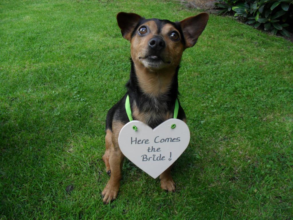 un paggetto cagnolino con umoristica insegna legata al collo