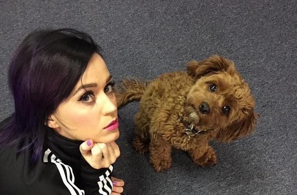Katy Perry e l'amore per gli animali