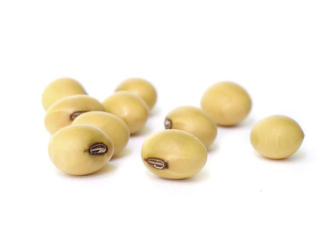 la soia è ricca di proteine, ferro e calcio