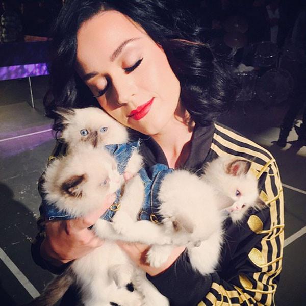 Sopracciglia ad ala di gabbiano dalla linea morbida per Katy Perry