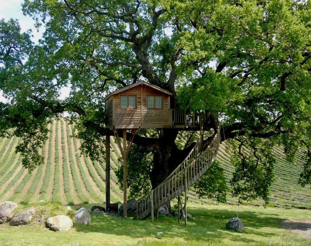 Casa sull'albero La Piantata a Viterbo