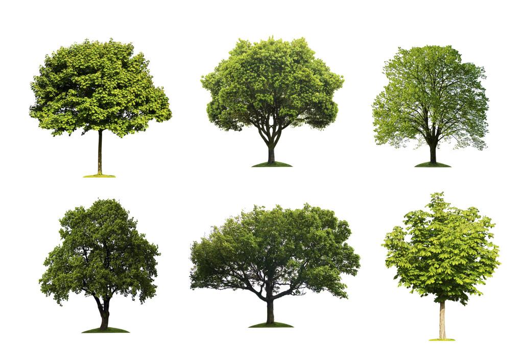 Test: che tipo di albero sei?