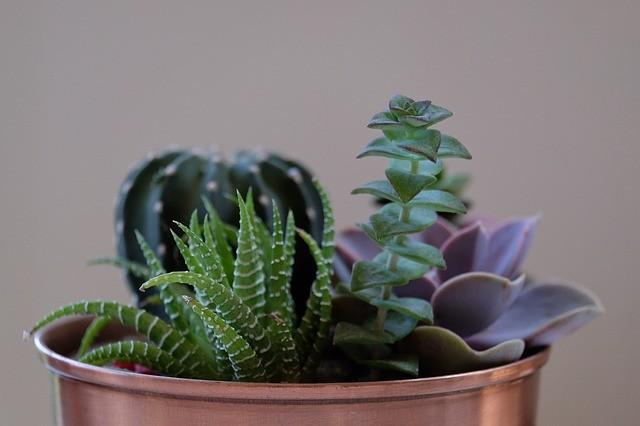 Piante Ufficio Open Space : La natura in ufficio: piante sempreverdi sulla scrivania unadonna