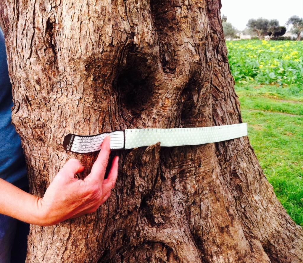 Si gioca a prendere le misure della pancia di una albero, con il mommy measure