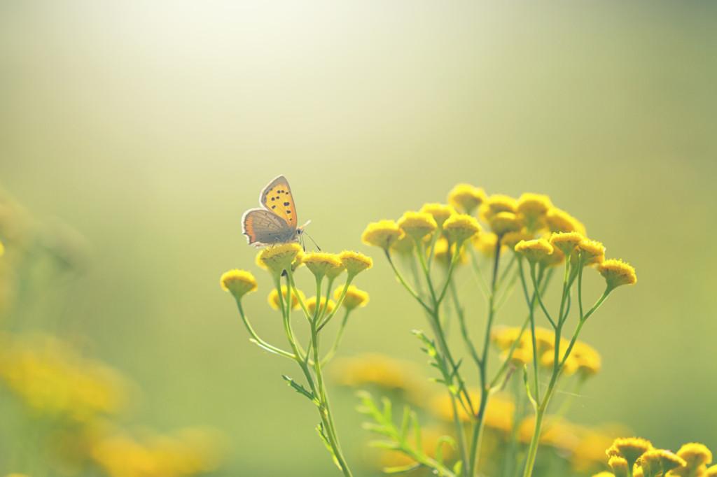 Quella dei bambini farfalla è una patologia genetica rara e poco conosciuta.