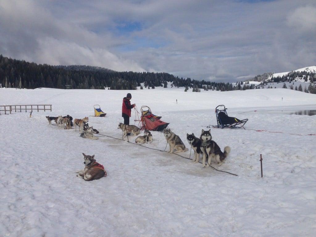 Lo sleddog arriva anche sulle Alpi.