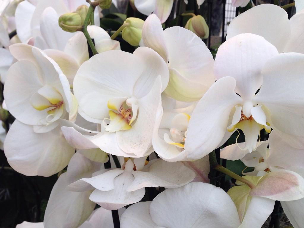 Le nuove serre delle orchidee.