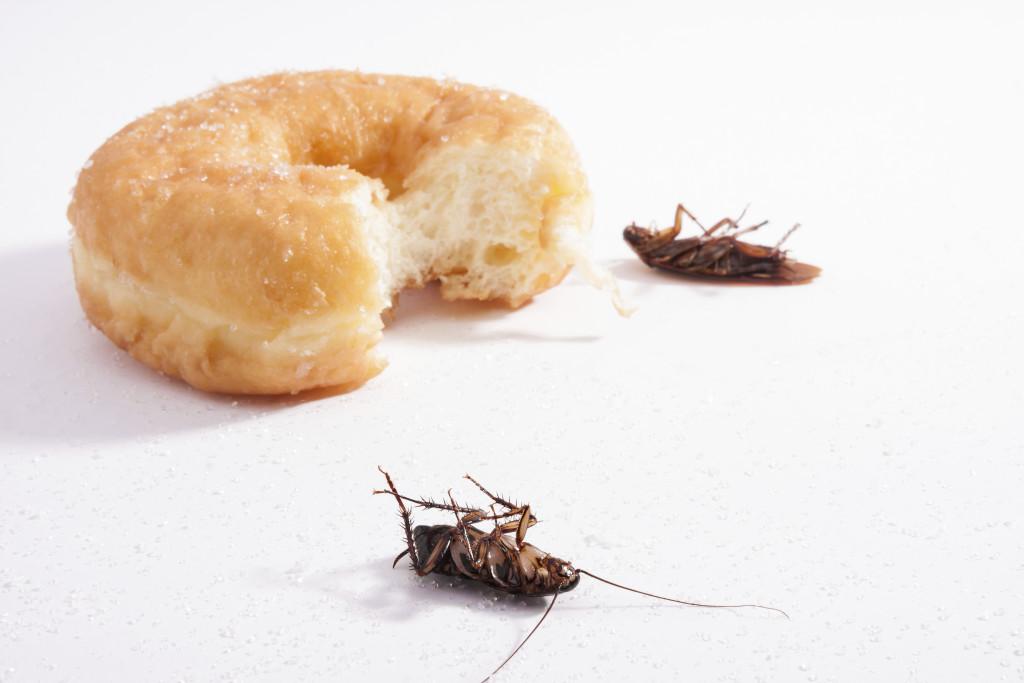 Come eliminare gli scarafaggi