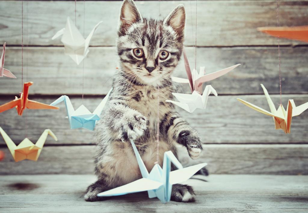 Giochi per gatto