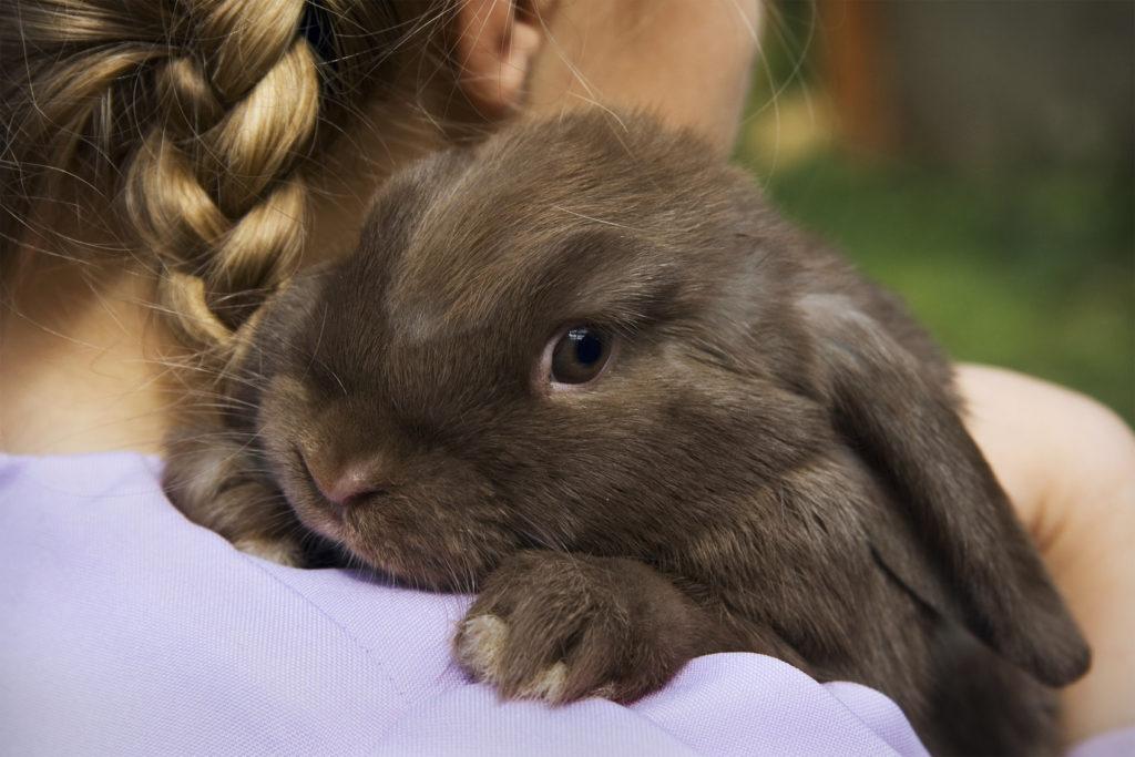 I coniglietti sono curiosi e amano esplorare.