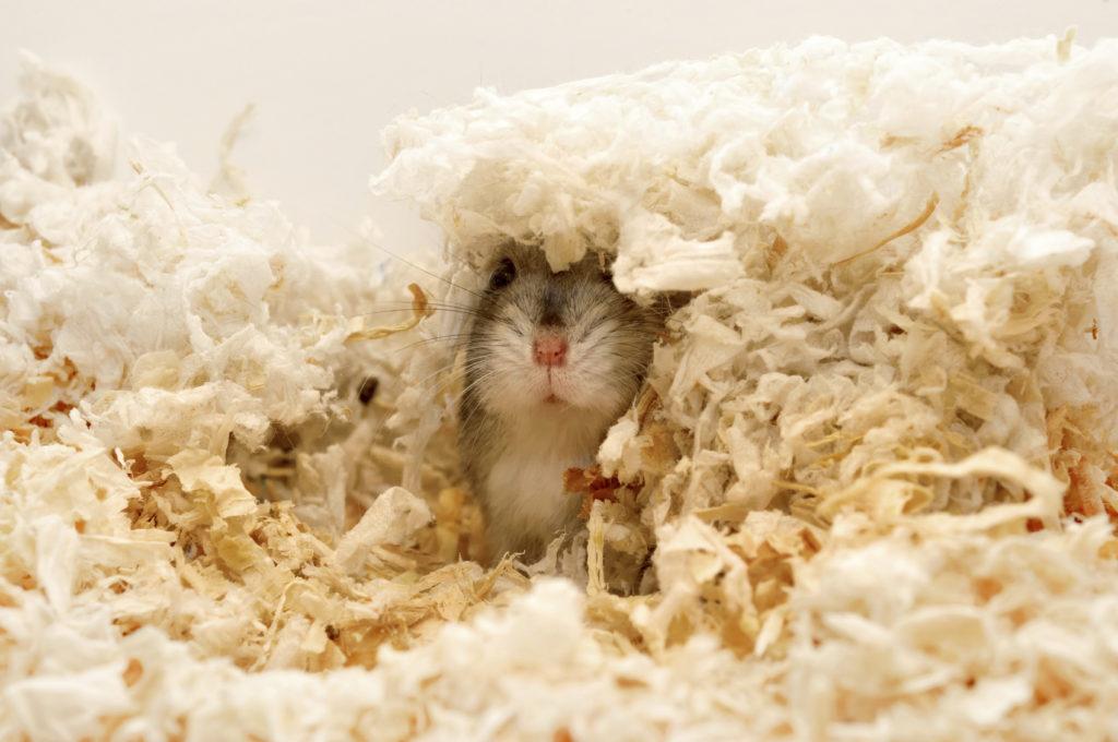 I criceti amano costruirsi un rifugio in cui nascondersi.