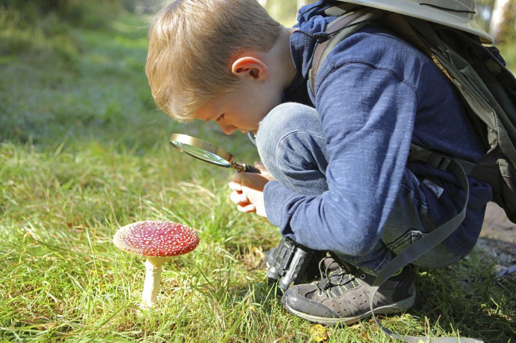 Raccogliere i funghi come diventare esperti