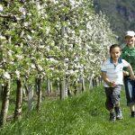 Festa della fioritura. Associazione turistica Lana e dintorni