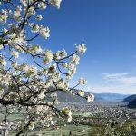 Südtirol, Festa della fioritura. Associazione turistica Lana e dintorni