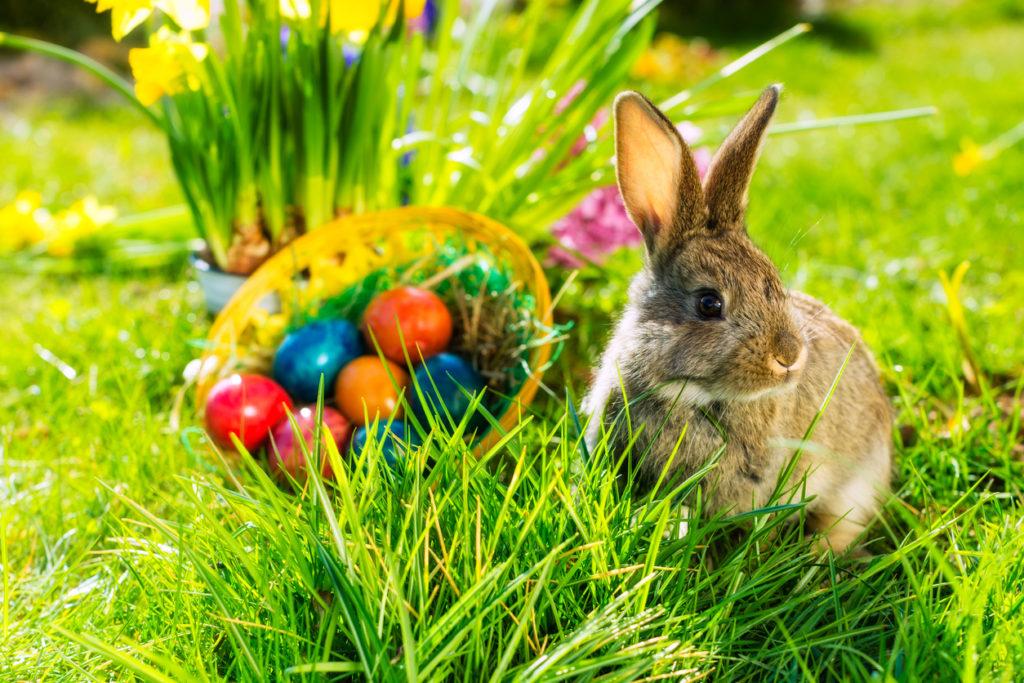 Coniglio e uova di Pasqua