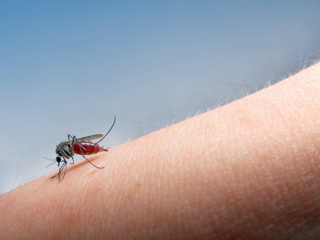 Puntura di zanzara