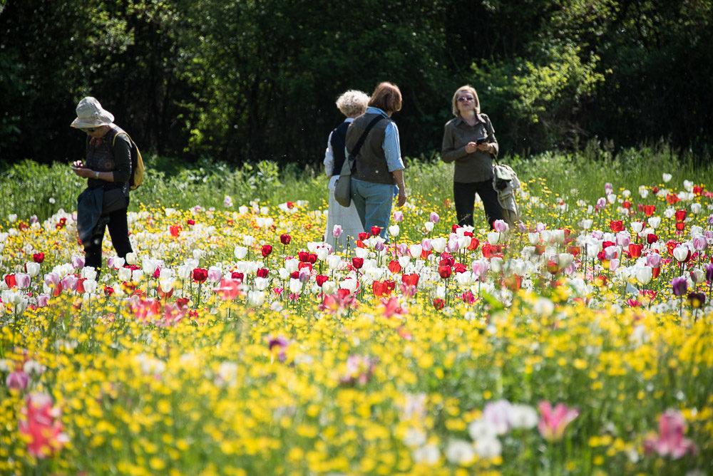 Giardinity Primavera (2)